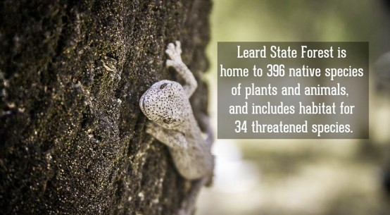 Leard State Forest is home to 396 native species.