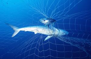 shark-net