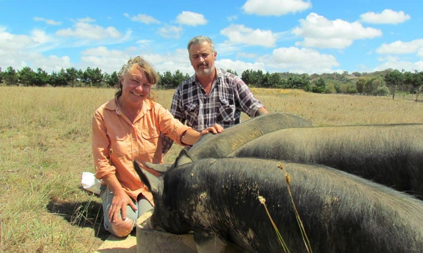 Penny Kothe and Paul McKinnon with three pigs on one hectare of grass. The poultry was shifted around one hectare blocks.