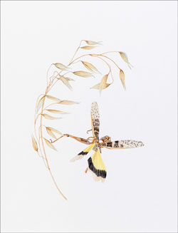 Botanical Art. Because these wings are no longer wings to fly