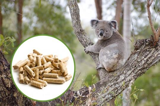 koala vs wood pellets