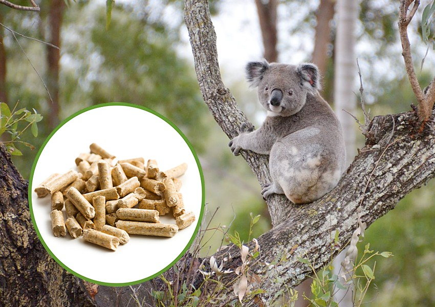 koala vs wood pellets