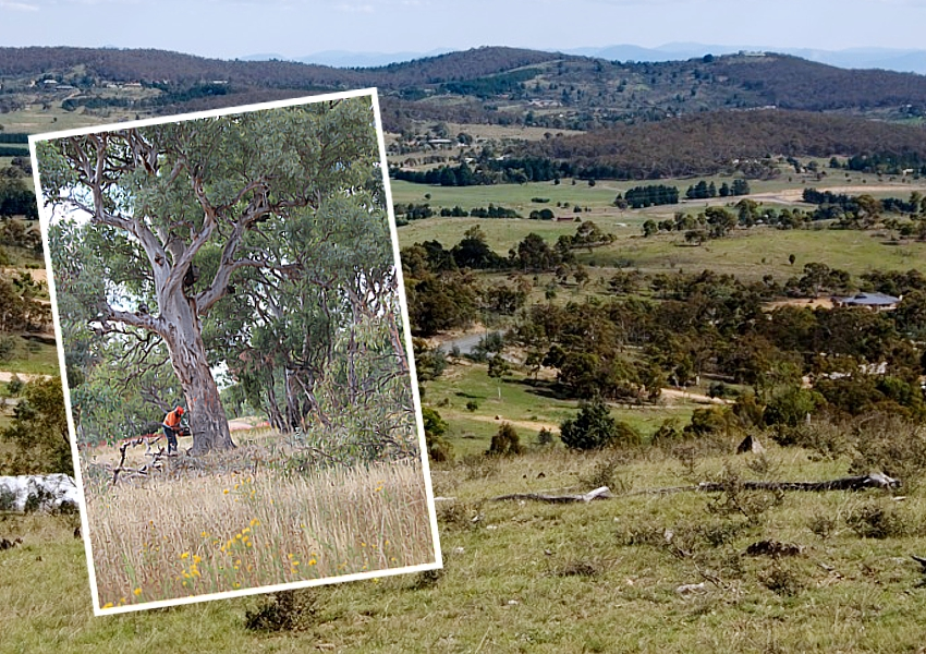 land clearing NSW