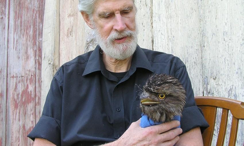 Howard Ralph Tawny Frogmouth