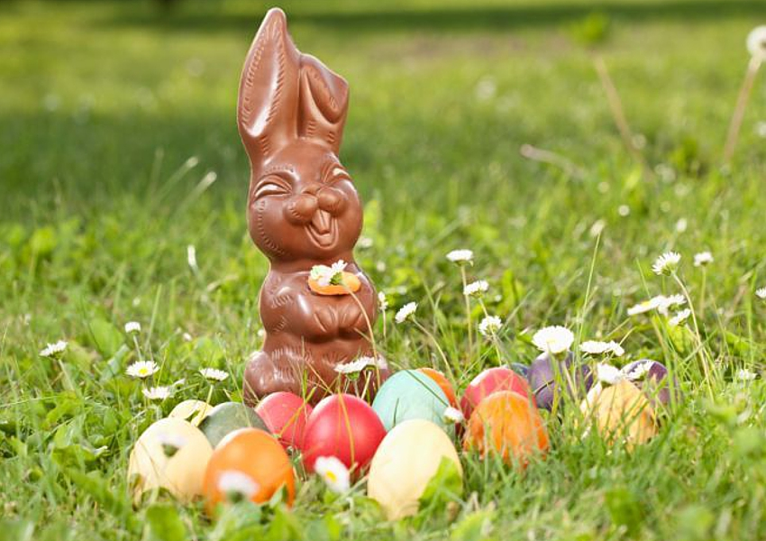 chocolate easter bunny hunt