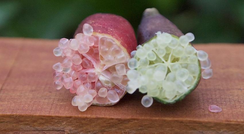 finger limes Citrus australasica