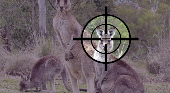 ACT kangaroo cull 2018