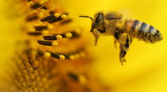 bee work stress