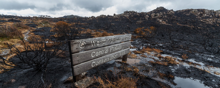 The scorched wooden signpost welcoming bushwalkers to the central plateau world heritage area. Photograph: Dan Broun
