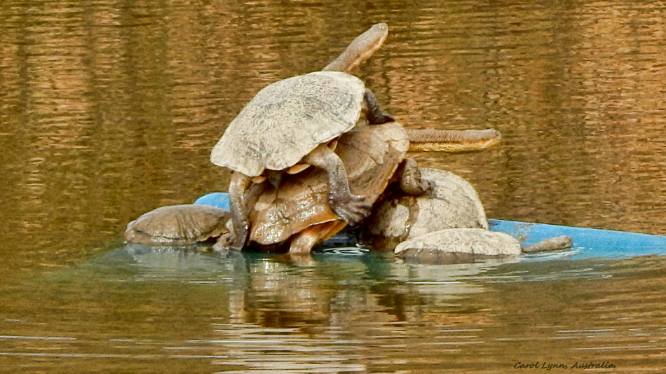 tortoise-stack