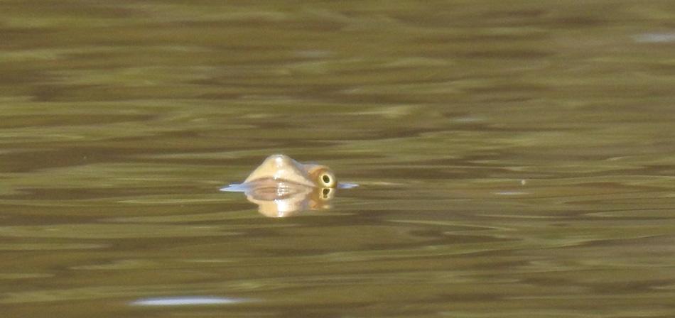 turtle-observes