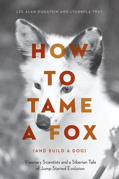 how to tame fox