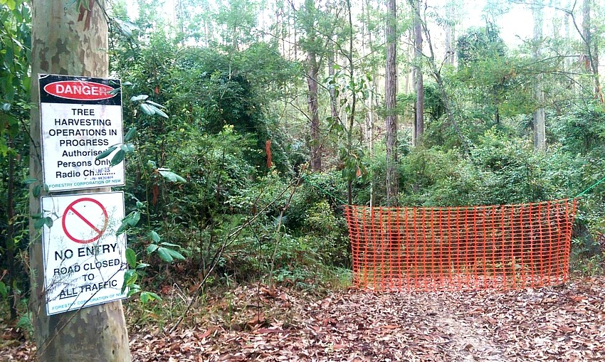 MOGO forest clearing