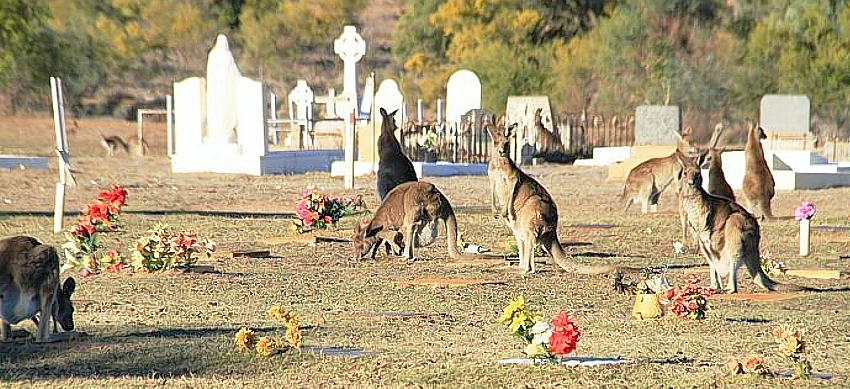 roos Cunnamulla Cemetery cr Elly Bradfield ABC News