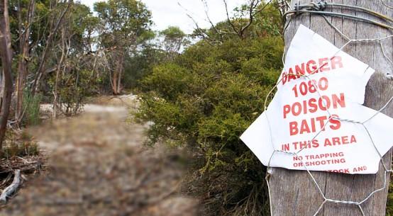 1080 bait sign on tree