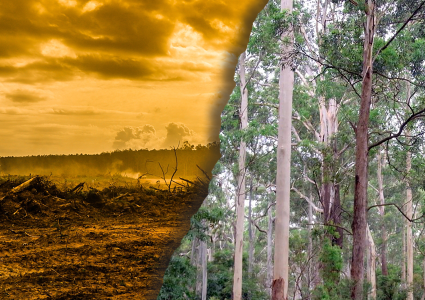 NSW logging native forests