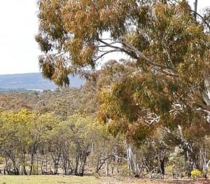 QPRC rural zoning