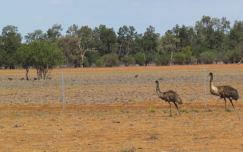 Emus fenced off District Bulletin