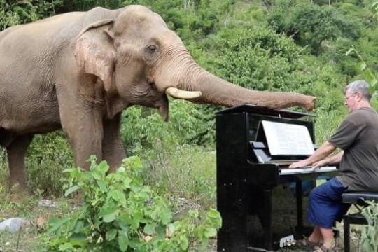 elephant-piano-music