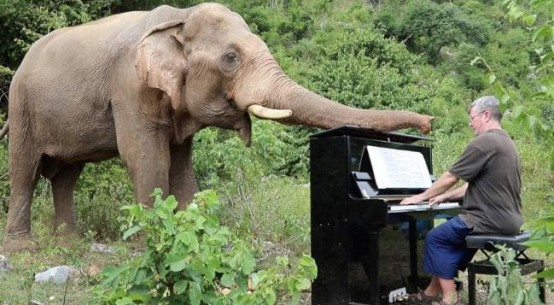 elephant-piano-music
