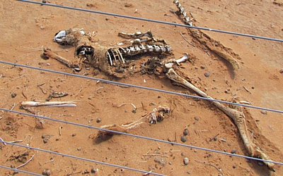 roo skeleton