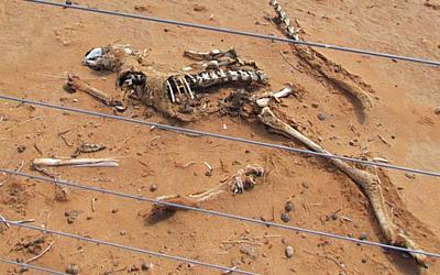 roo skeleton