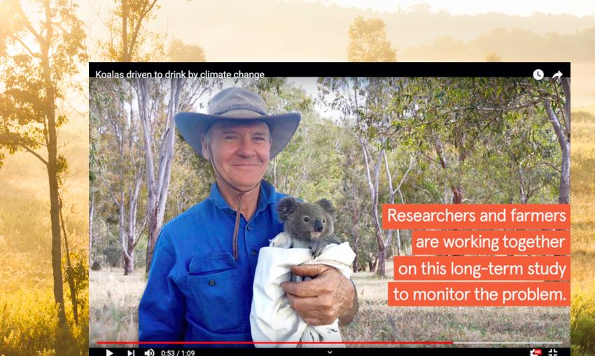 koala-water-video