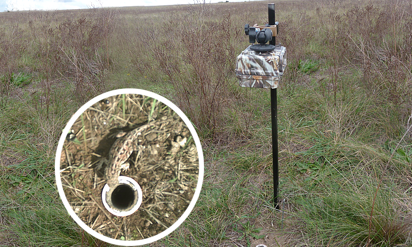 motion sensing wildlife Queanbeyan Poplars