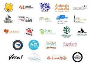 23-animal-organisations-slam-act-kangaroo-slaughter