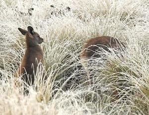 native-herbivores-cCarol-Lynn-District-Bulletin-Oct2016