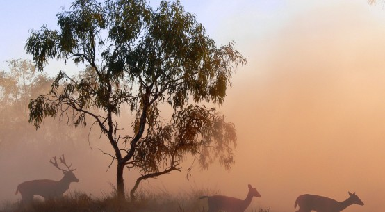 Australia-dry-ButtonPusher-Pexels-deer-MarkSims-dreamstime