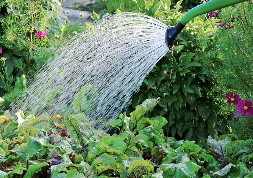 QPRC hand watering restrictions