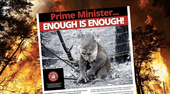 koala-crisis-fbk-post-jan2020