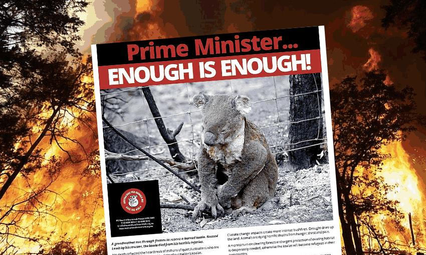 koala-crisis-fbk-post-jan2020