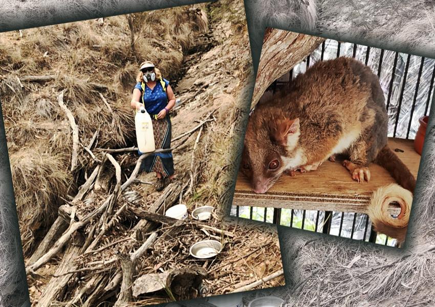 wildlife-support-Jan2020