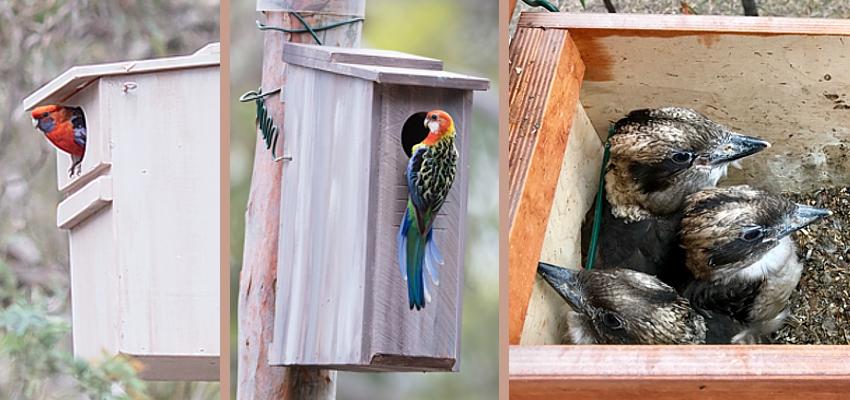 nesting-boxes-feb2020