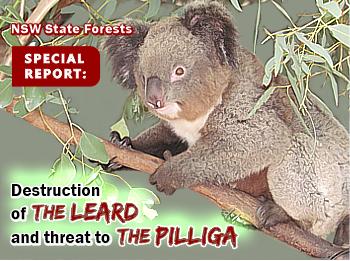 Special Report-widget_Leard_Pialligo