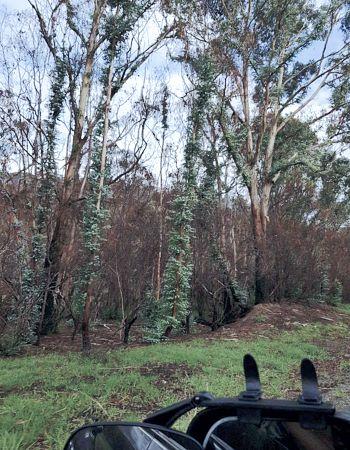 Namadgi-regrowth-post-fire-apr2020
