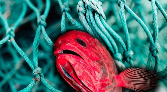 fishing-orange-roughy-protection-July2020