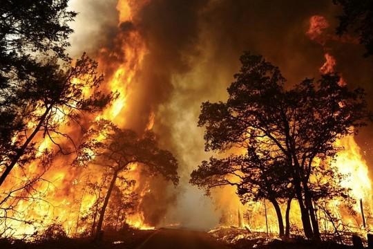 trees-ablaze-bushfires2019-2020-via-fbk
