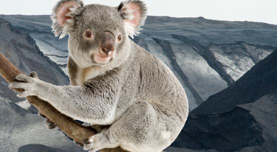 koala-habitat-vs-coalmining-SueVH