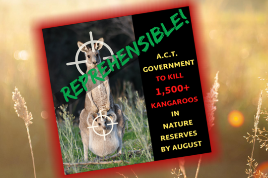 ACT-govt-Roo-Cull-1500-August