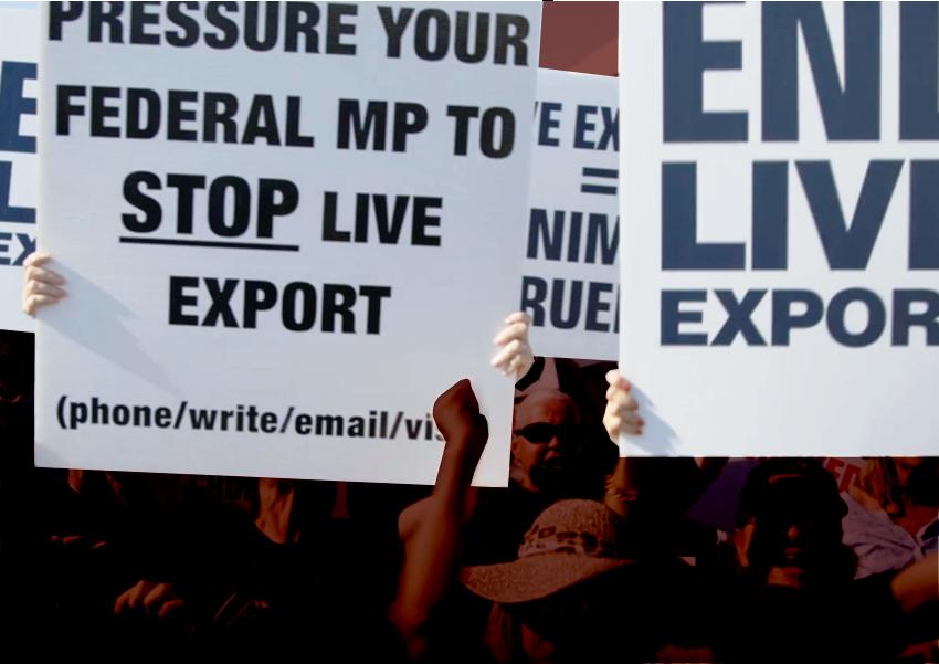 live-export-protestors