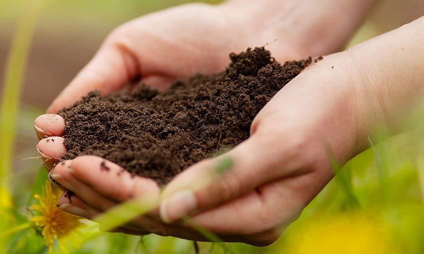 soil-regenerative-farming_Andrii-Zastrozhnov_Dreamstime