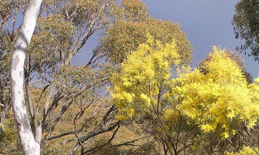remnant-bushland-Maria-Taylor