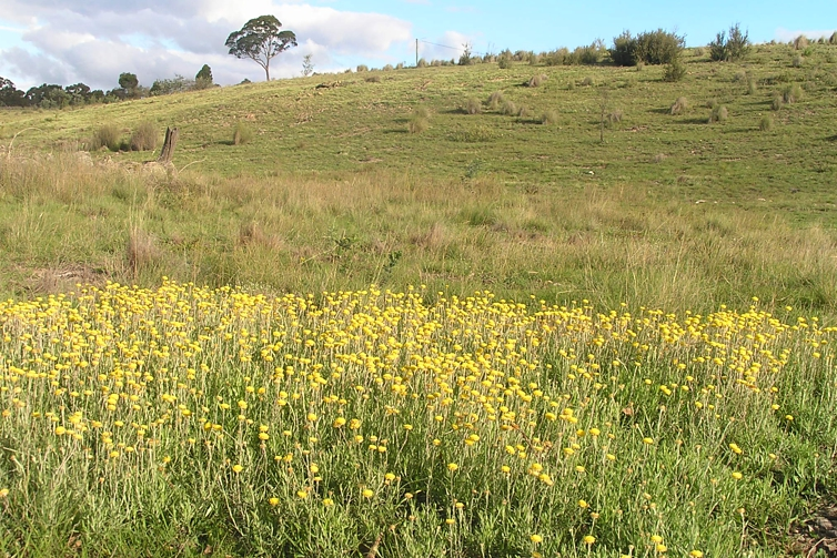 remnant-grassland-wildflowers-Maria-Taylor