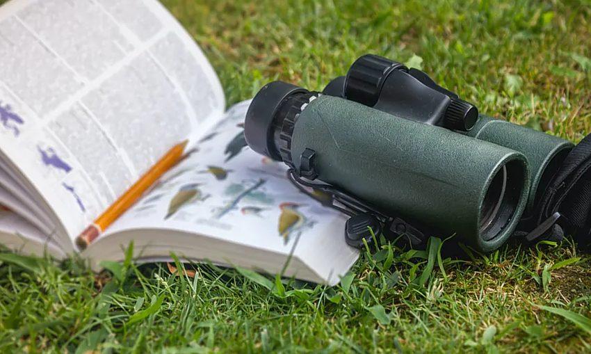 birdwatching_via-coversation_shutterstock